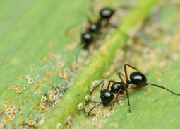 Ant pest control in Edinburgh